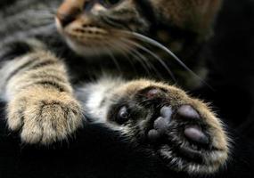 Kätzchen Pfoten foto