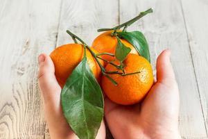Mandarinen mit Blättern in den Händen eines Kindes foto