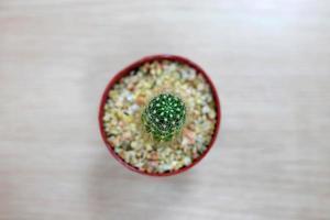 Kaktus auf Holztisch foto