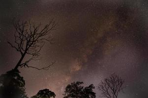 Astrofotografie Sternspuren mit trockenem Baum über Wald. foto