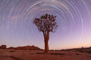 Köcher Baum Startrail foto