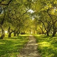 grüner Wald foto