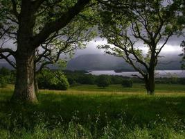 irischer Wald foto