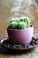 Kaktus auf Kaffeeschale foto