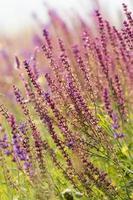 schöne wilde Blumen foto