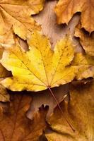 Herbstlaub über hölzernem Hintergrund foto