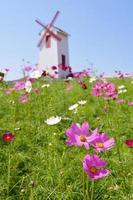 Gänseblümchenblume mit Windradhintergrund foto