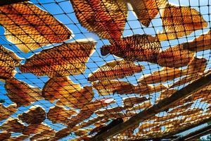 frischer Fisch trocknet auf Netz, getrockneter Fisch. foto