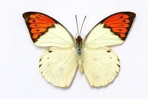 Schmetterlingssammlung foto