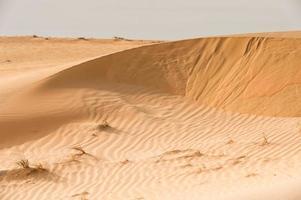 Sahara Wüste