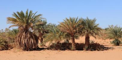 oasen in der wüste sahara foto