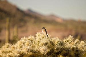 Wüstenvogel foto