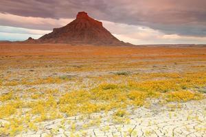 Wüstenwildblumen foto