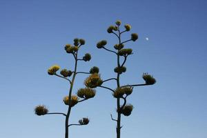 Wüstenpflanzen foto