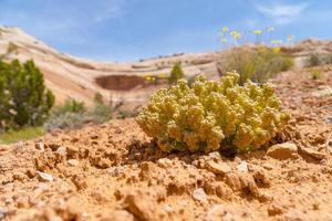 Wüstenvegetation foto