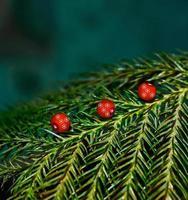rotes Objekt & grüne Pflanzen - Archivbild
