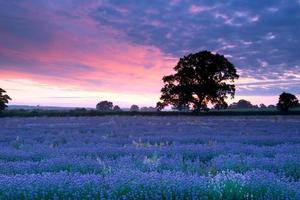 Lavendelhimmel foto