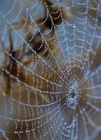 winzige Tautropfen auf feinem Spinnennetz foto