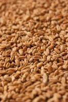 Weizenkörner Hintergrund foto
