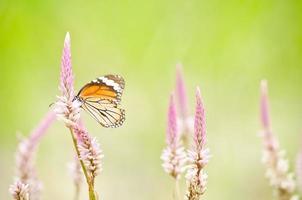 orange Schmetterling auf Blume foto