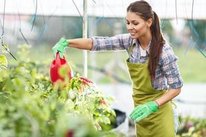 Florist gießt Pflanzen in ihrem Gewächshaus. foto