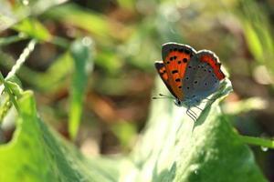 kleiner Schmetterling auf dem glänzenden Blatt # 3 foto