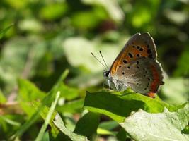 glänzender Schmetterling auf dem Feld # 2 foto