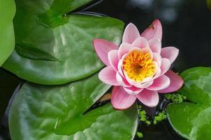 schöne Wasserpflanze