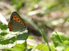 glänzender Schmetterling auf dem Feld # 4 foto