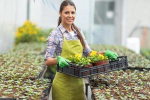 Frau Gartenarbeit im Gewächshaus. foto