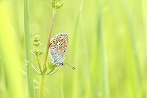 Nahaufnahme eines Schmetterlings foto