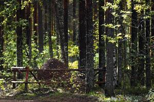 großer Ameisenhaufen im Wald.
