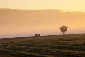 Nebeliger Morgen . Sonne foto