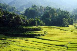 terrassiertes Reisfeld auf dem Land, Chiang Mai, Thailand foto