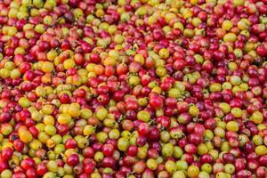Kaffee Beeren Hintergrund foto