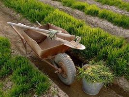 Schubkarre mit Werkzeugen in einem Frühlingsgarten foto
