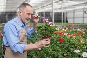 geschickter alter Gärtner bewundert seinen Job