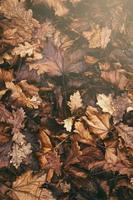Haufen Herbstlaub foto