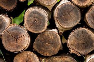 Stümpfe zur Herstellung von Holzkohle.