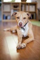 Mischlingshund foto