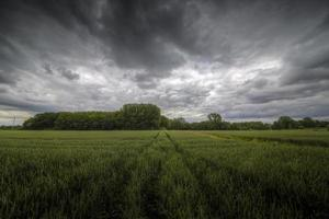 Feld und Gewitter