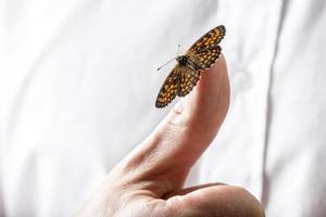 schöner Schmetterling auf einem Geschäftsmannfinger, der seine Hand heraushält foto