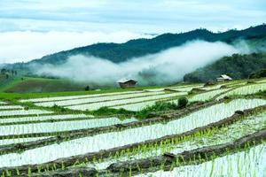 traditionelle Landwirtschaft in Cheing Mai, Nordthailand.