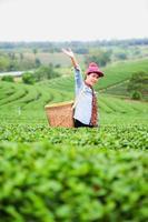 Asien schöne Frau, die Teeblätter in Plantage, Lebensstilkonzept auswählt foto