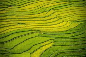 Reisterrasse in Vietnam foto