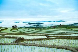 traditionelle Landwirtschaft in Cheing Mai, Nordthailand. foto