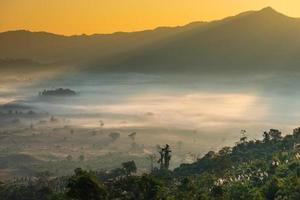 schöne Landschaft und Nebelbedeckung auf dem Feld am Morgen.