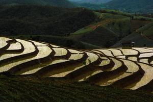 Reisfelder auf terrassierten