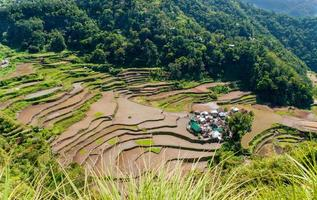 Reisterrassen und Dorf Banga-an foto