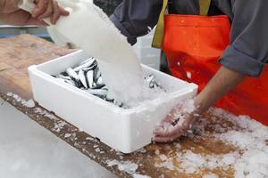Fischer bereiten Sardinen für den Transport vor foto